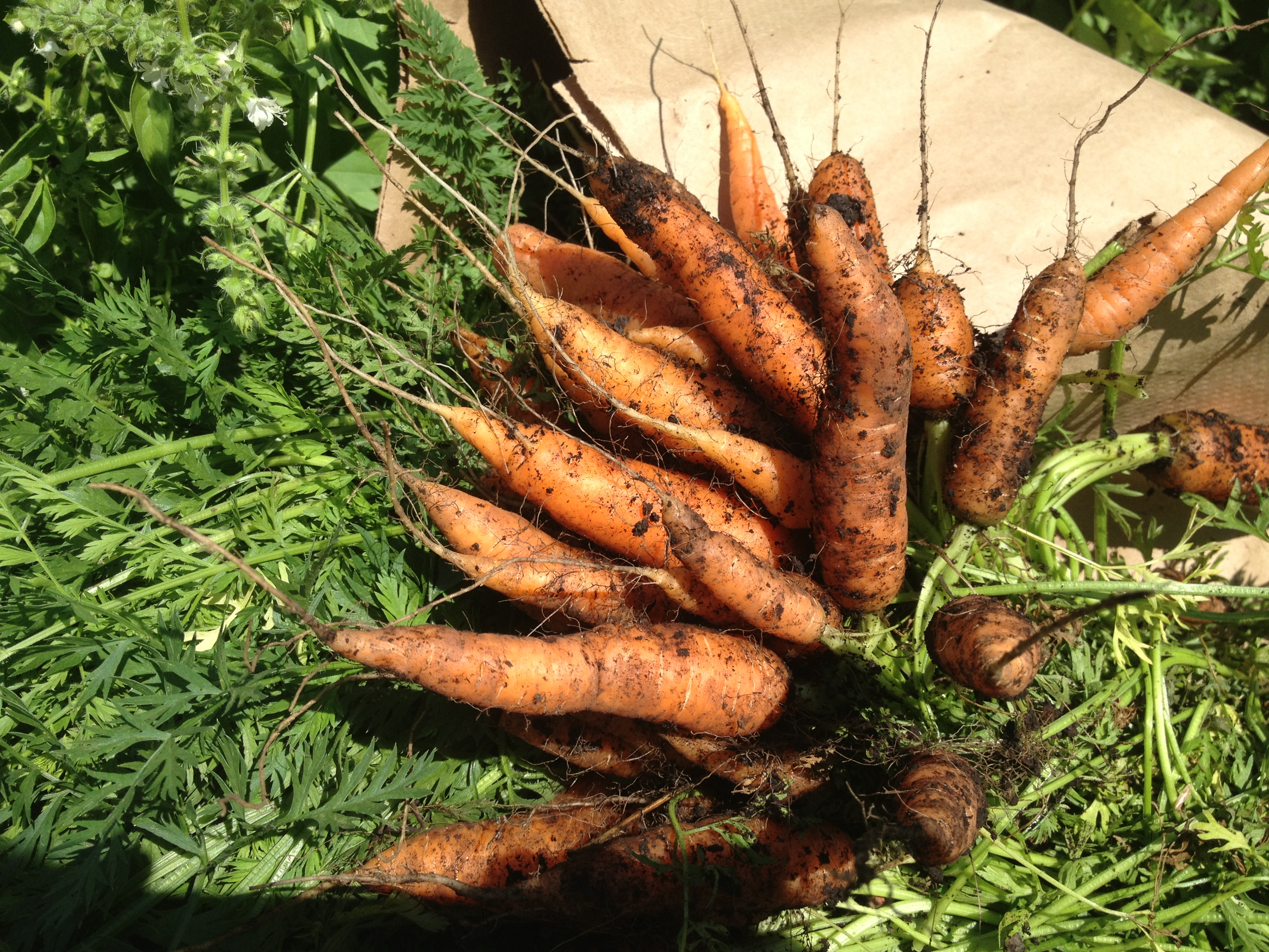 Carrot Cake Jam Grow It Cook It Can It